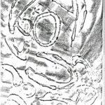 Bellaria-geometrie-mare-23
