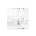 Bellaria-studi-grafici-01
