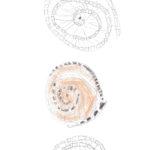 Bellaria-studi-grafici-02