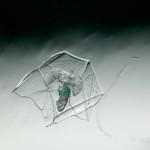 Cavoliniidae pteropod inside siphonophore bract