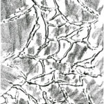 Bellaria-geometrie-mare-04